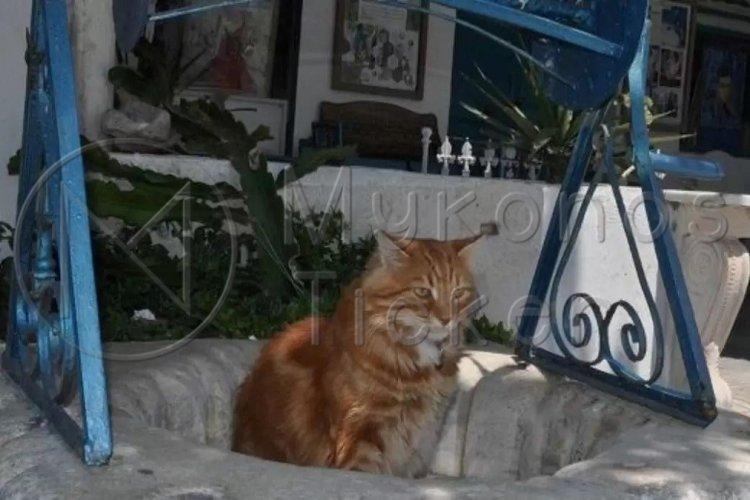 Domestic Animals: Κατατέθηκε το Νομοσχέδιο για τα ζώα συντροφιάς [Έγγραφο]