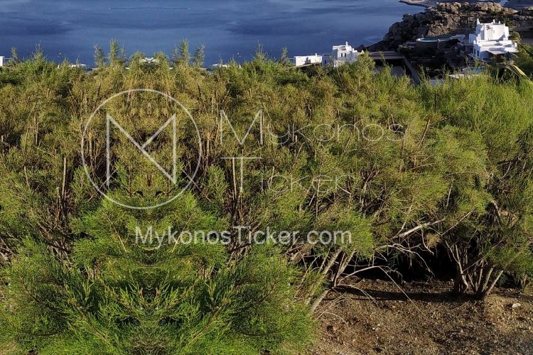 Cutting down trees: Τέλος η ταλαιπωρία για κοπή και κλάδευση δέντρων!! Απλοποιείται η διαδικασία!!